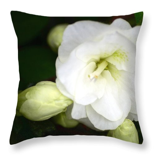Azalea Throw Pillow featuring the photograph White Azalea by Sandi OReilly