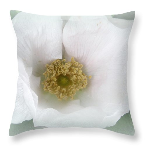 Rose Throw Pillow featuring the photograph White Beach Rose - Rosa Rugosa by Mother Nature