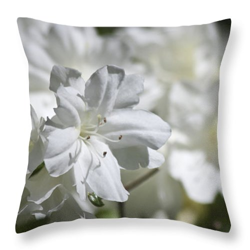 Azalea Throw Pillow featuring the photograph White Beauty by Teresa Mucha