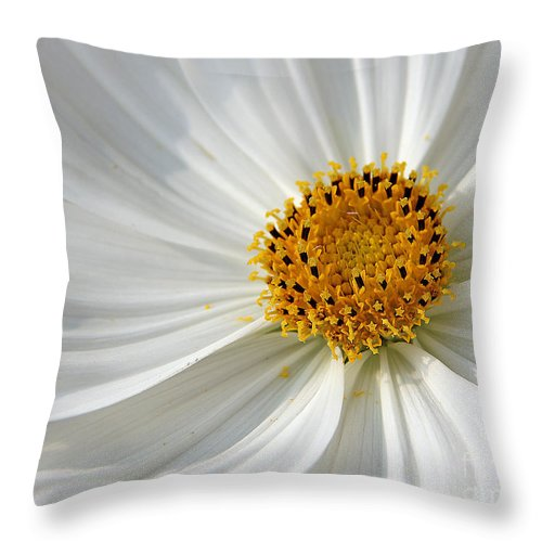 Flowers Throw Pillow featuring the photograph White Cosmos by Jack Schultz