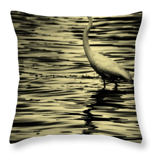 White Crane Throw Pillow featuring the photograph White Crane by Roger Wedegis