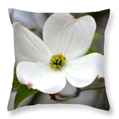 White Dogwood Flower Throw Pillow For Sale By P S