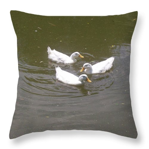 Bird Throw Pillow featuring the photograph White Ducks Swimming by Corinne Elizabeth Cowherd