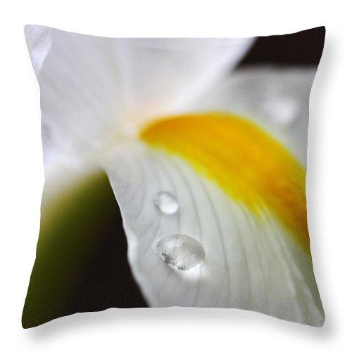 Dutch Iris Throw Pillow featuring the photograph White Dutch Iris Flower Marco by Jennie Marie Schell