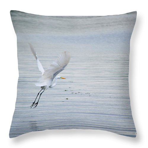 Bird Throw Pillow featuring the photograph White Egret Flying by Diego Re