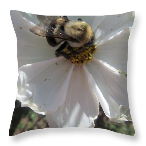 Bee Throw Pillow featuring the photograph White Flower And Bee by Tina M Wenger