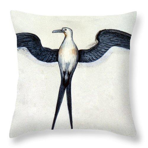1585 Throw Pillow featuring the photograph White: Frigate Bird by Granger