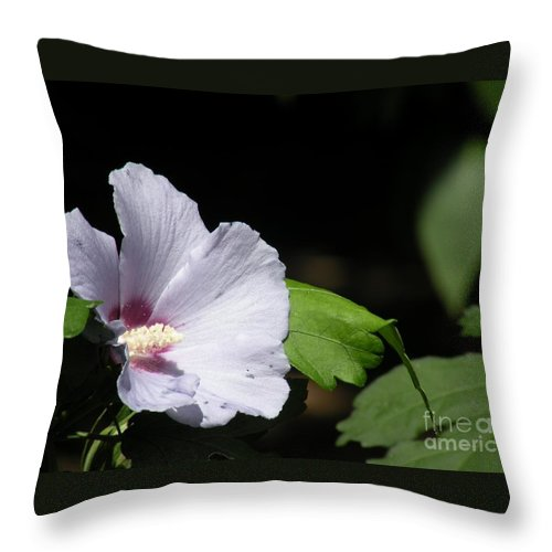 Flower Pictures Throw Pillow featuring the photograph White Hibiscus by Saundra Lane Galloway