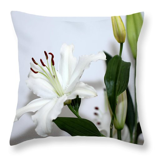 Lily Throw Pillow featuring the photograph White Lily With Buds by Carole-Anne Fooks