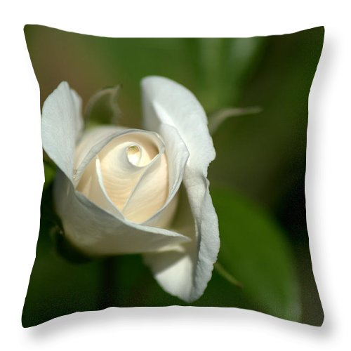 White Rose Throw Pillow featuring the photograph White Rose by Chris Day