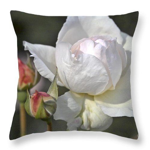 Rose Throw Pillow featuring the photograph White Rose by Heiko Koehrer-Wagner