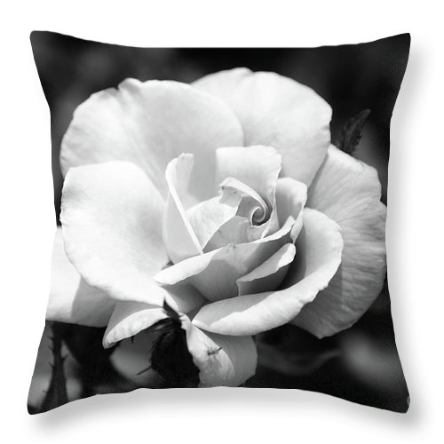 Rose Throw Pillow featuring the photograph White Rose by Ronald Grogan