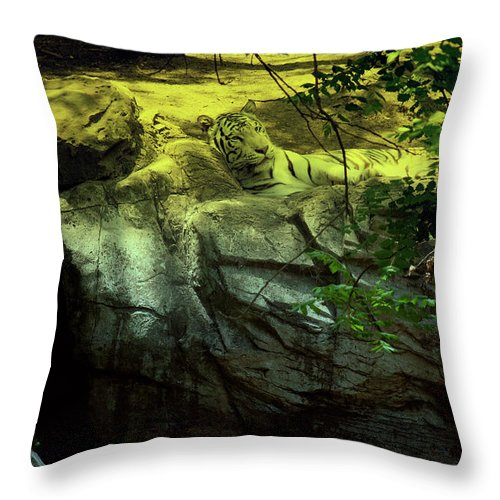 Tiger Throw Pillow featuring the photograph White Tiger by Douglas Barnard
