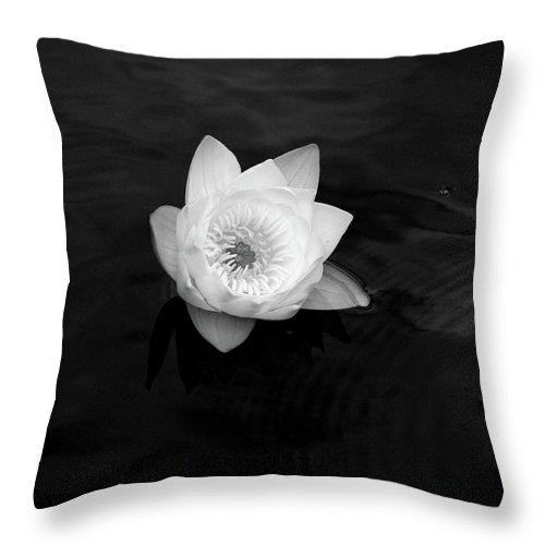 Lehtokukka Throw Pillow featuring the photograph White Water-lily 3 by Jouko Lehto