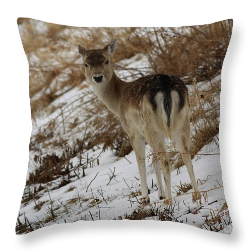 Whitetail Fawn In A Winter Meadow Throw Pillow featuring the photograph Whitetail Fawn In A Winter Meadow by Inspired Nature Photography Fine Art Photography