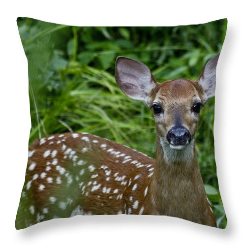Fawn Throw Pillow featuring the photograph Who Are You by Betsy Knapp