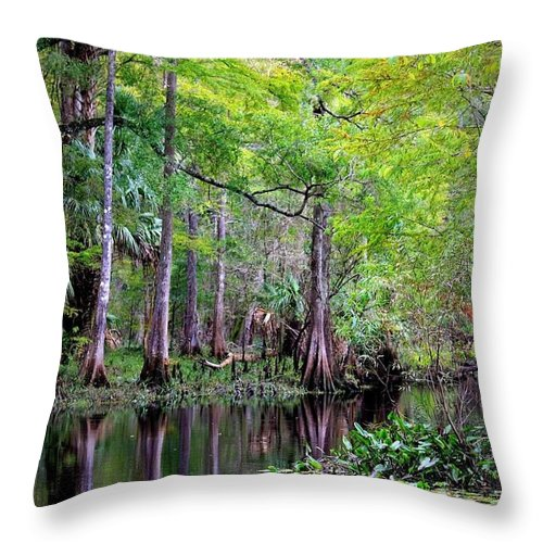 Cypress Trees Throw Pillow featuring the photograph Wild Florida - Hillsborough River by Carol Groenen
