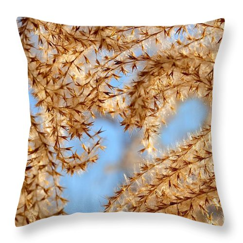 Grass Throw Pillow featuring the photograph Wild Grasses Against A Blue Sky by Elaine Manley