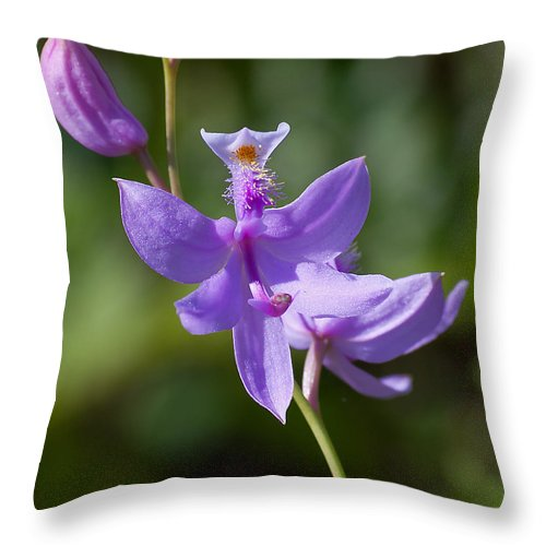 Orchid Throw Pillow featuring the photograph Wild Lavender Orchid by Kenneth Albin