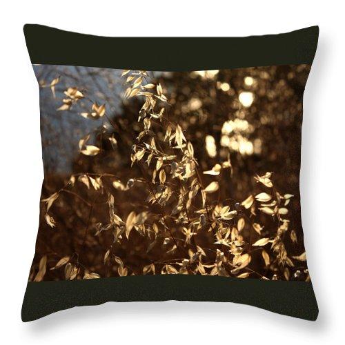 Close-up Throw Pillow featuring the photograph Wild Oats by Leonard Sharp