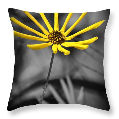 Flowers Throw Pillow featuring the photograph Wild Swamp Daisy by Carolyn Marshall