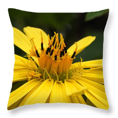 Nature Throw Pillow featuring the photograph Wild Thing by Susan Capuano