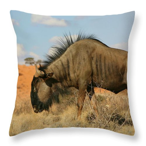 Wildebeest Throw Pillow featuring the photograph Wildebeest by Bruce J Robinson