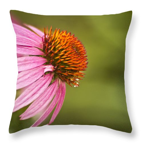 Coneflower Throw Pillow featuring the photograph Wildflower Dew Drops by Carolyn Marshall