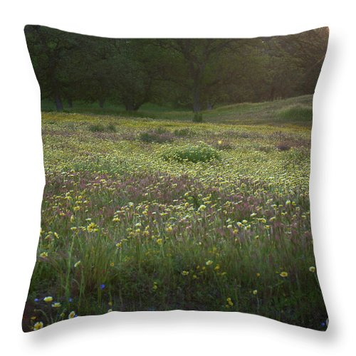 Wildflowers Throw Pillow featuring the photograph Wildflower Sunburst One by Brooke Roby