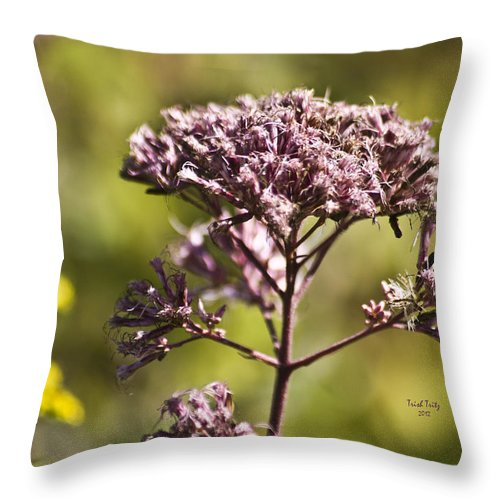 Flower Throw Pillow featuring the photograph Wildflower by Trish Tritz