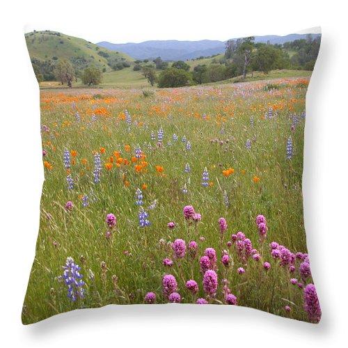 Shell Creek Wildflowers Throw Pillow featuring the photograph Wildflower Wonderland 6 by Lynn Bauer