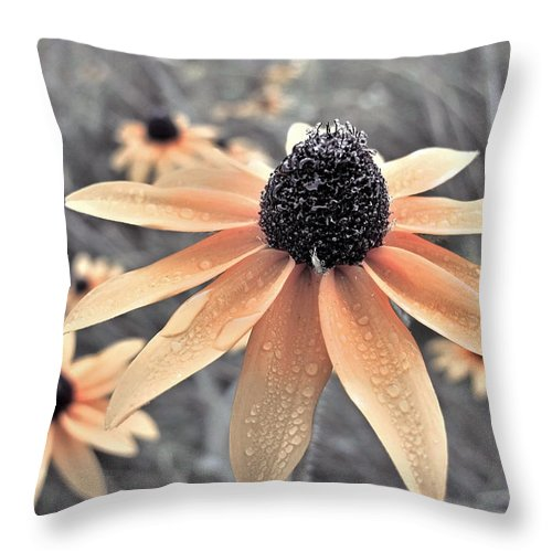 Black Eyed Susan Flowers Throw Pillow featuring the photograph Wildflowers Of Ontario by Miss Dawn