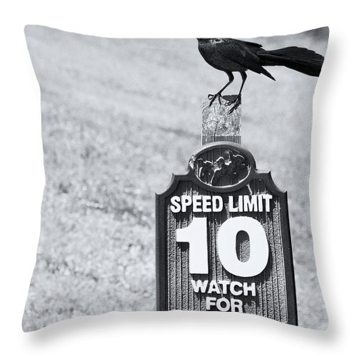 Crow Throw Pillow featuring the photograph Wildlife Watching The Speed Limit by Roger Wedegis