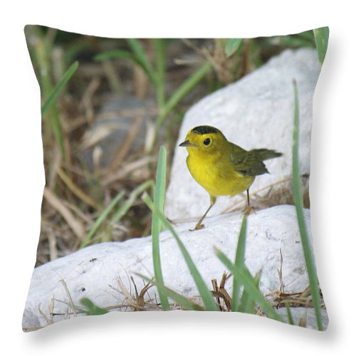 Roena King Throw Pillow featuring the photograph Wilsons Warbler By The Stream by Roena King