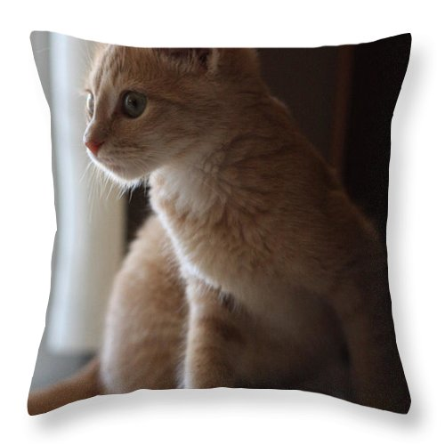 Kittens Throw Pillow featuring the photograph Window Light by Kim Henderson