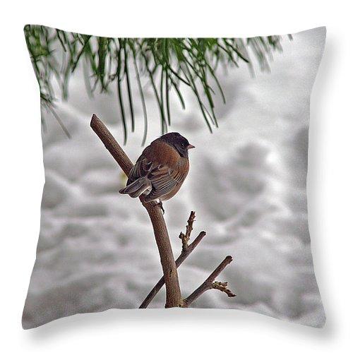 Birds Throw Pillow featuring the photograph Winter Bird by Randy Harris