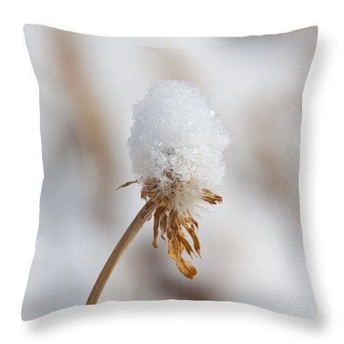 Winter Throw Pillow featuring the photograph Winter Blossom II by Dana Kern