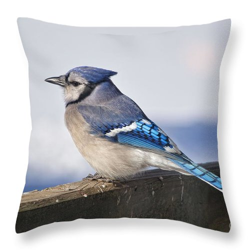 Bluejay Throw Pillow featuring the photograph Winter Blue Jay by Pamela Baker