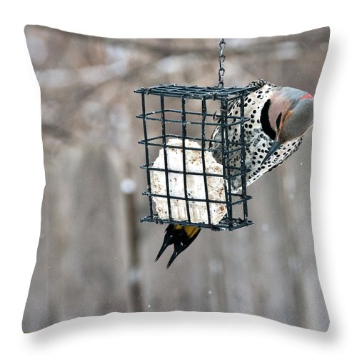 Yellow Shafted Northern Flicker Throw Pillow featuring the photograph Winter Feeding by Edward Peterson