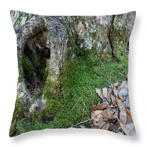 Throw Pillow featuring the photograph Winter Hide Away by Barbara S Nickerson