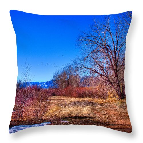 Denver Throw Pillow featuring the photograph Winter In South Platte Park by David Patterson