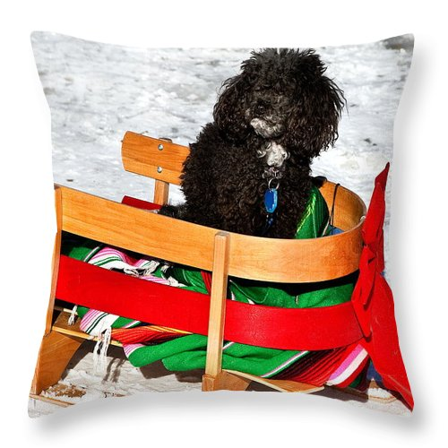 Poodle In Winter Throw Pillow featuring the photograph Winter Ride by Burney Lieberman