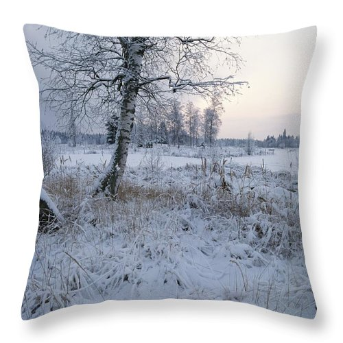 Scenes And Views Throw Pillow featuring the photograph Winter Scene With Snow-covered Grasses by Mattias Klum