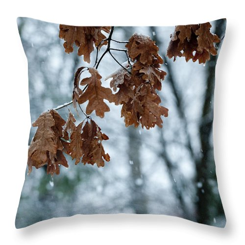 Sandra Bronstein Throw Pillow featuring the photograph Winter Takes Hold by Sandra Bronstein