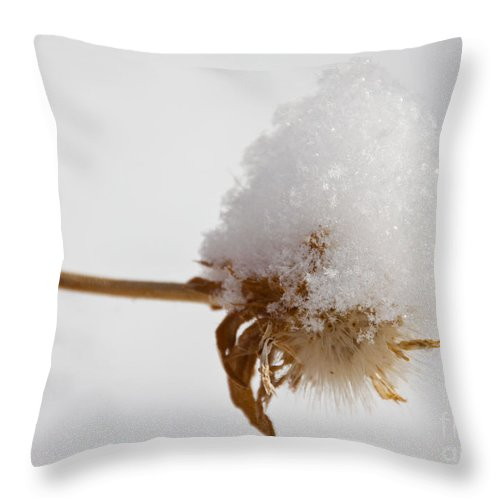 Winter Throw Pillow featuring the photograph Winters Blossom by Dana Kern