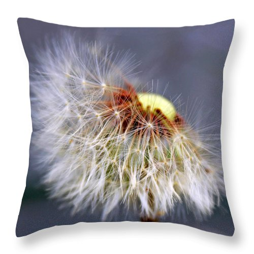 Dandelion Throw Pillow featuring the photograph Wishing by Linda Sannuti