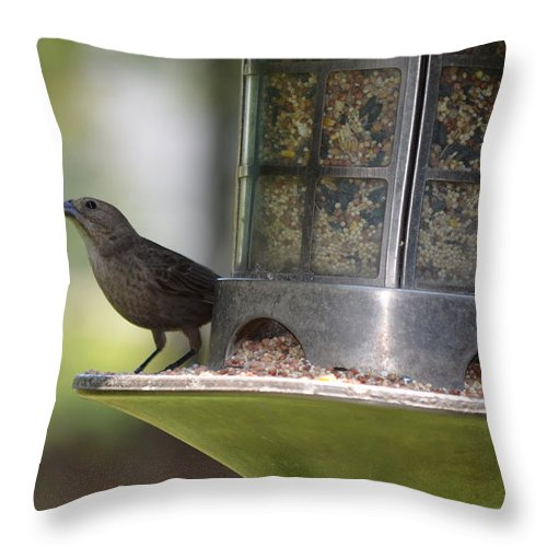 Birds Throw Pillow featuring the photograph With A Song In My Heart by Maria Urso