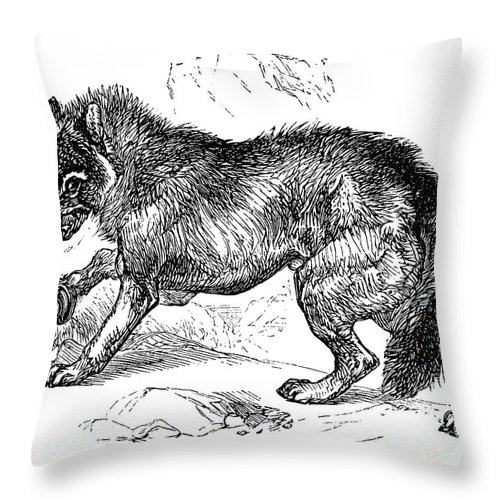 1855 Throw Pillow featuring the photograph Wolf Attack by Granger