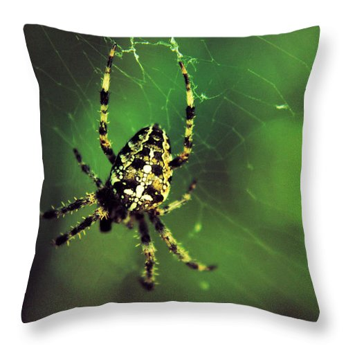 Spiders Throw Pillow featuring the photograph Wolf Spider by Jeff Swan