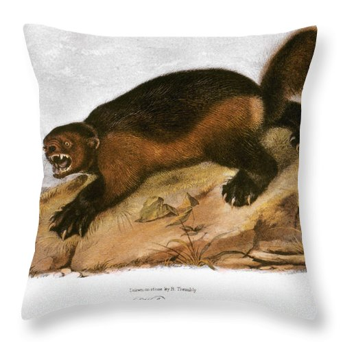 1846 Throw Pillow featuring the photograph Wolverine by Granger